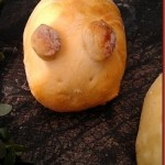 Zoete Kokos Konijnbroodjes
